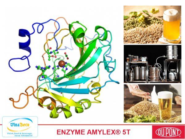 ENZYME AMYLEX 5T