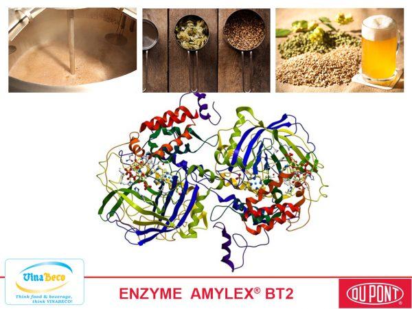 ENZYME AMYLEX BT2