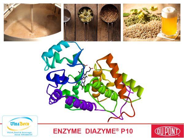 ENZYME DIAZYME P10
