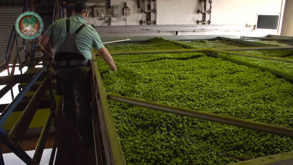 Hoa bia được sản xuất như thế nào28
