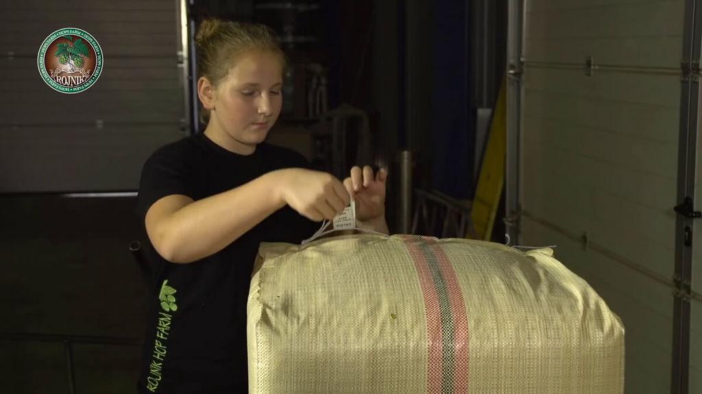Hoa bia được sản xuất như thế nào32